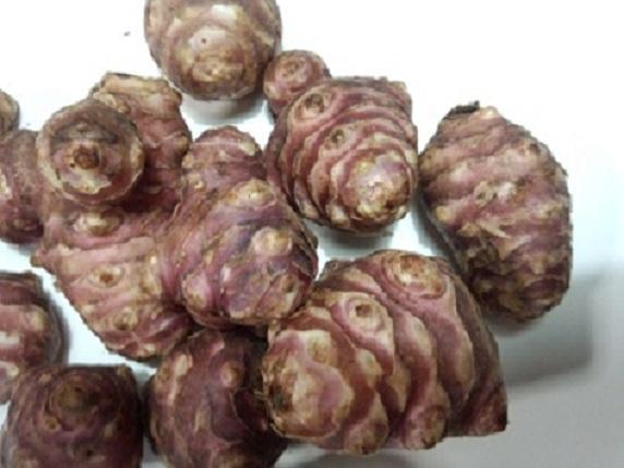 赤菊芋粉末の販売 | 菊芋の   -